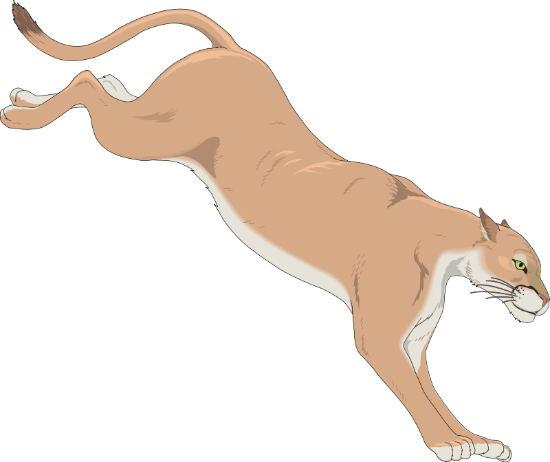 Free Mountain Lion Cartoon, Download Free Clip Art, Free.