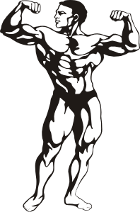 1684 Muscle free clipart.