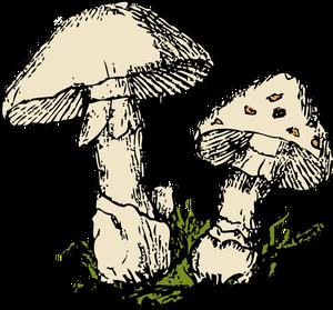 311 morel mushroom clip art free images.
