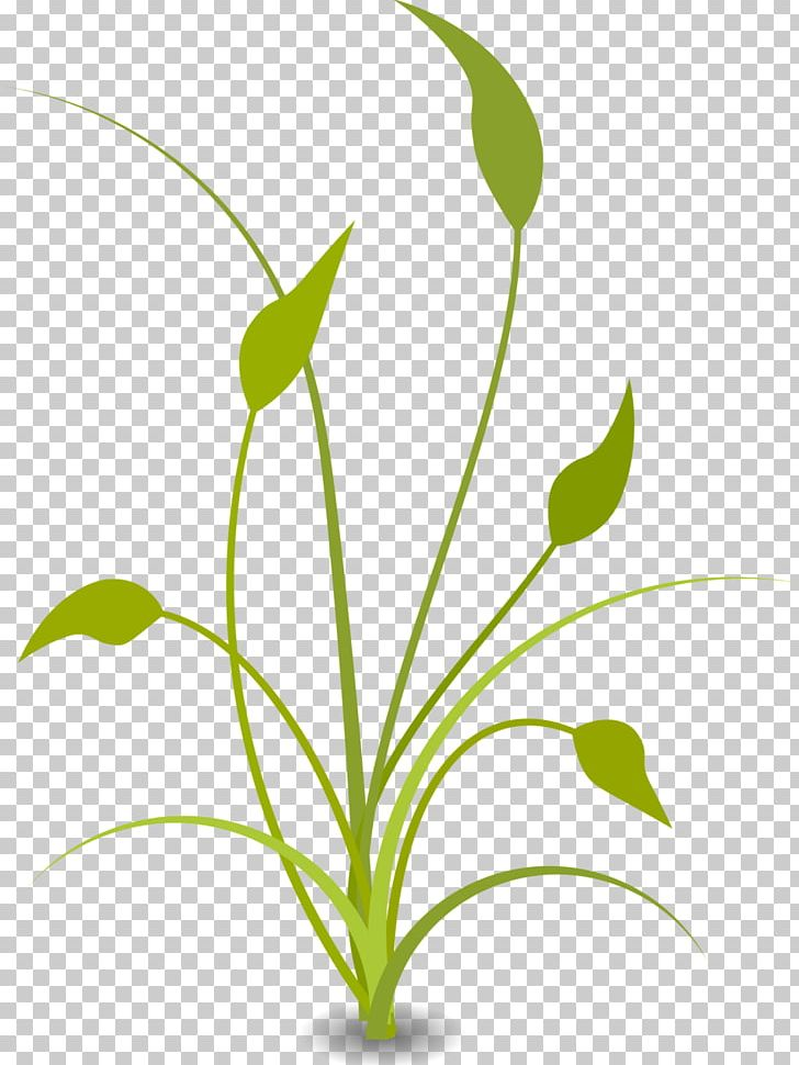 Nature Free Content PNG, Clipart, Branch, Clip Art, Download.