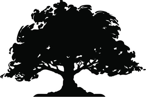 Best Oak Tree Illustrations, Royalty.