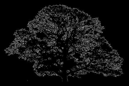 Free Oak Tree Silhouette, Download Free Clip Art, Free Clip.