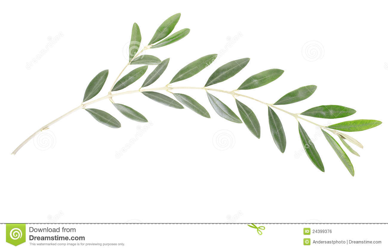 446 Olive Branch free clipart.
