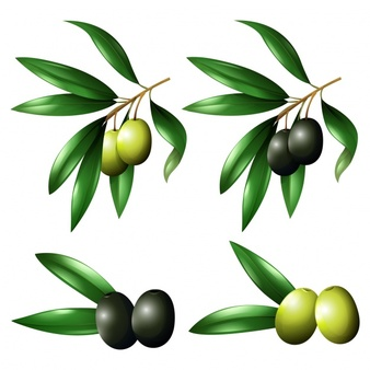 free olive clipart #2