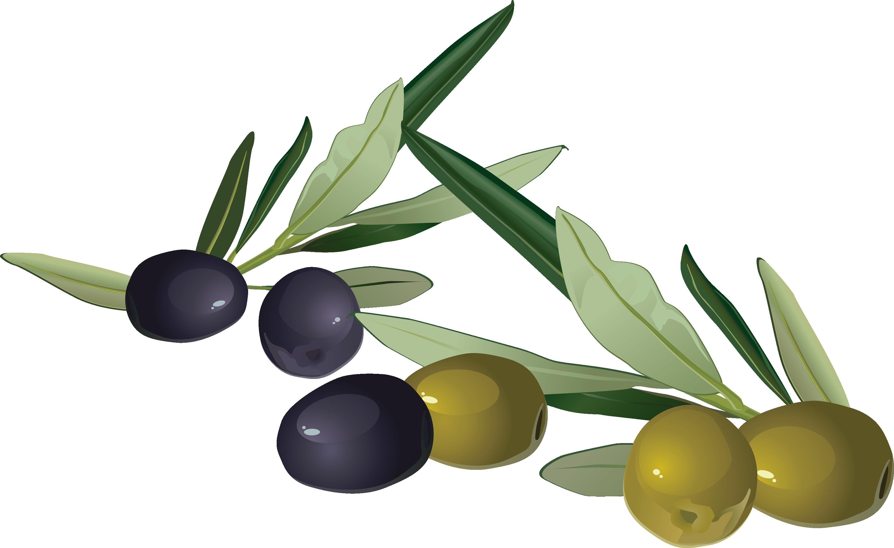 Olives images free olive clip art 3.