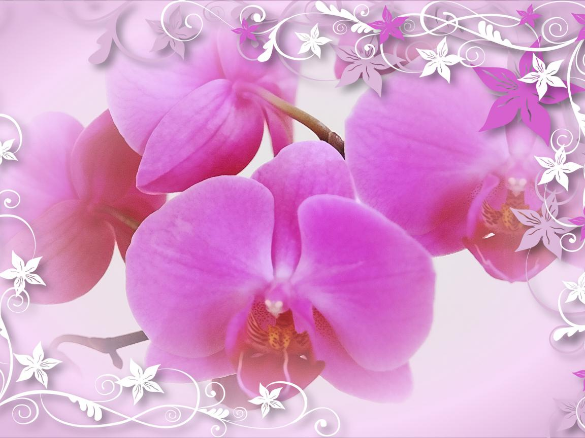 Free download border clipart flower wallpaper orchid.