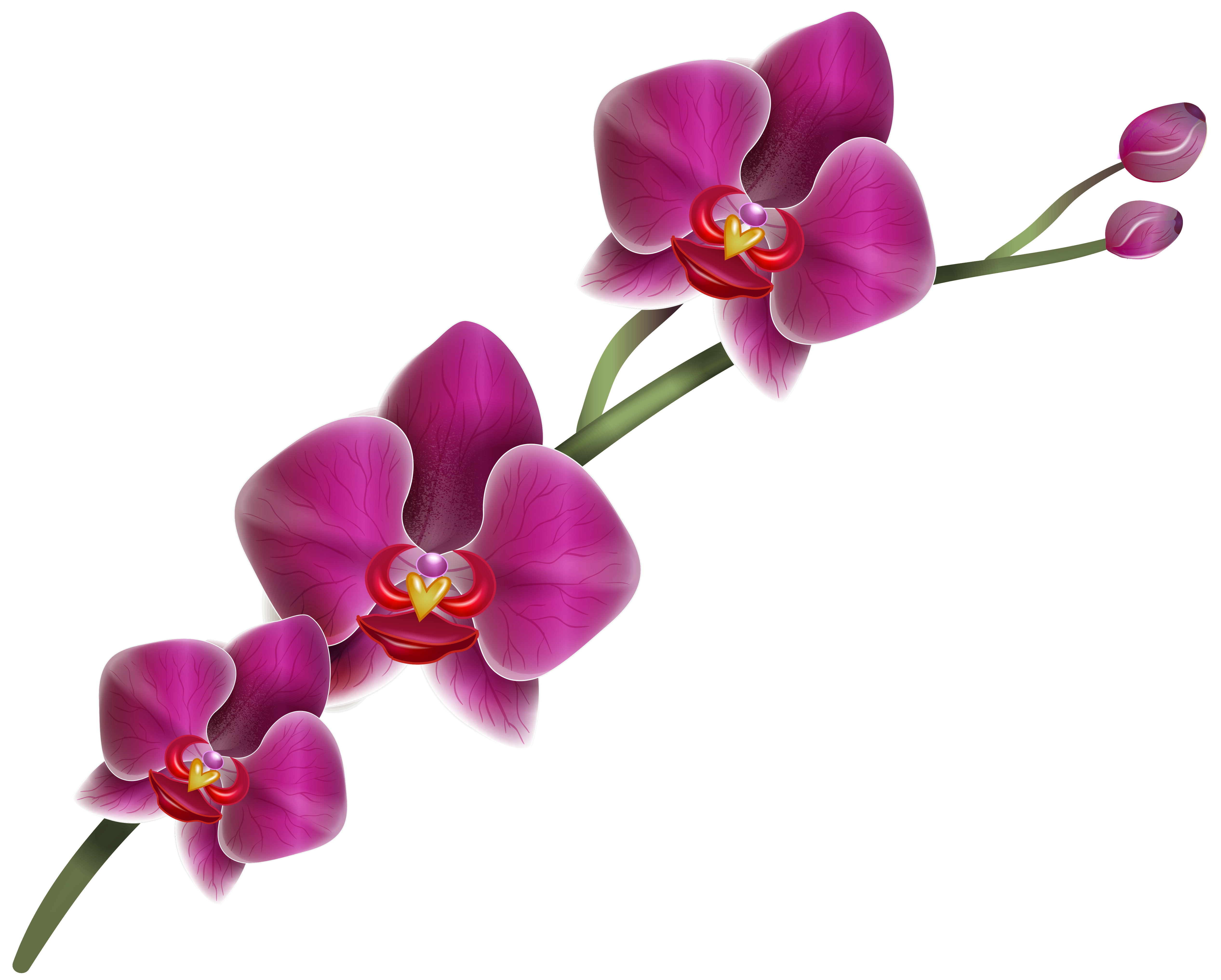Purple Orchid Clipart PNG Image.