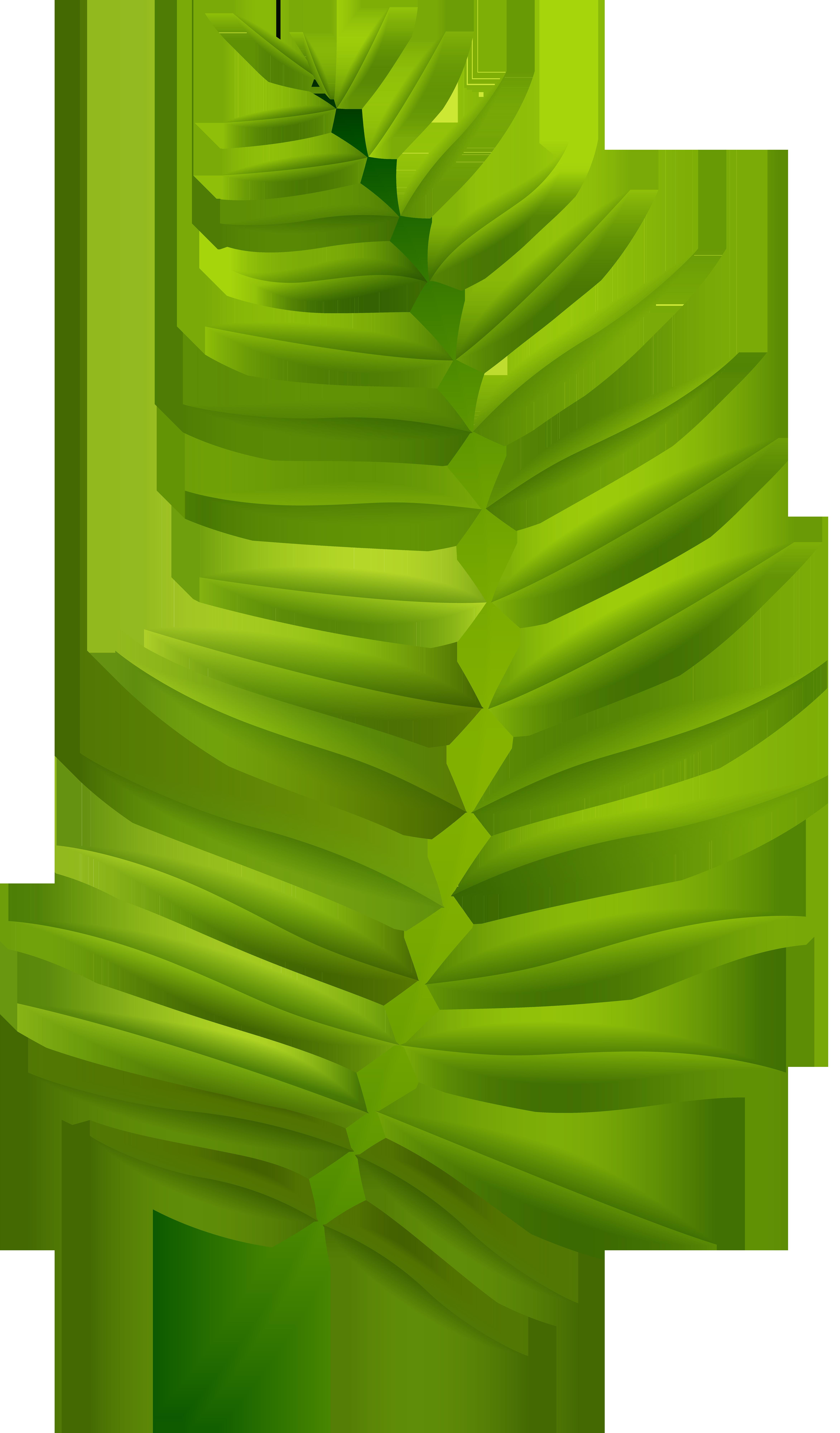 Palm Branch Transparent Clip Art Image.
