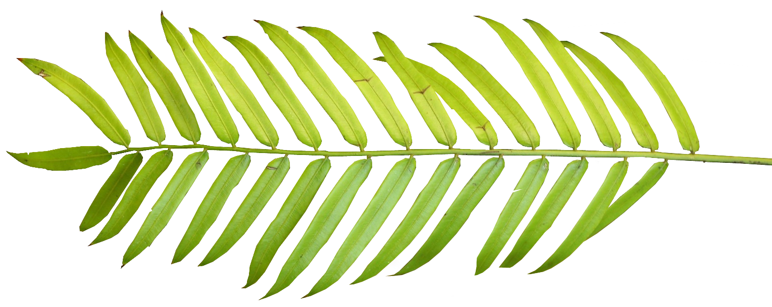 Free Tropical Leaf Cliparts, Download Free Clip Art, Free.