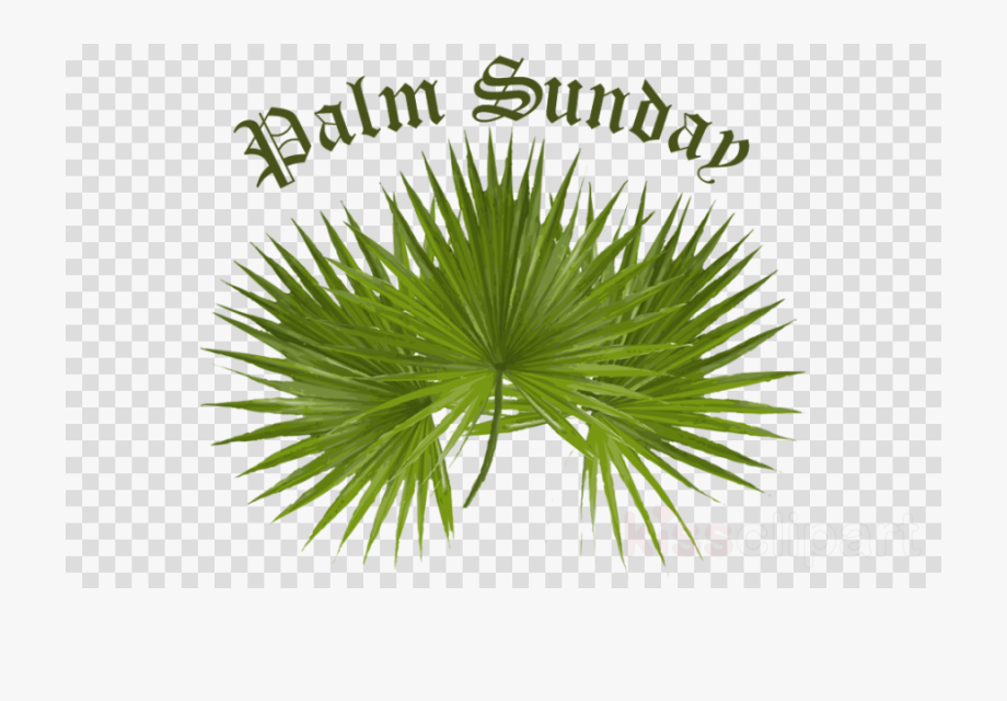 Download Palm For Palm Sunday Clipart Palm Trees Palm.