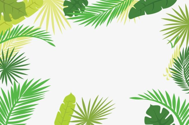 Palm Leaf Border, Cartoon, Hand Painted, Vector PNG and.