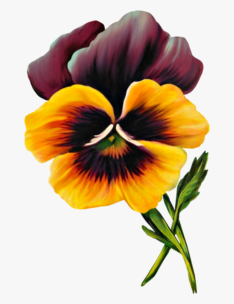 Free Vintage Pansy Graphic.