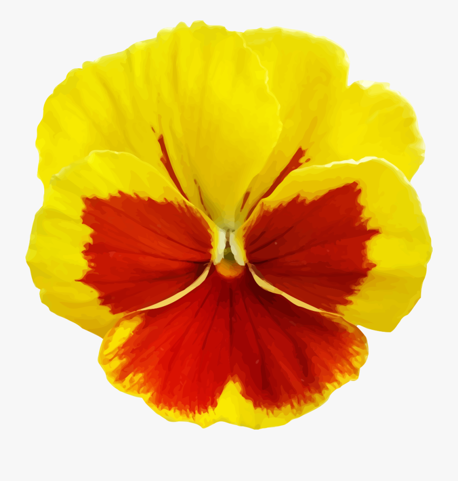 Yellow Pansy Flower Png , Free Transparent Clipart.