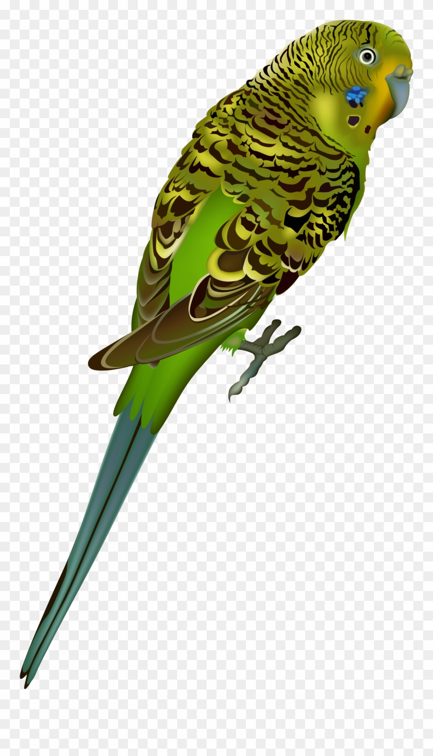 Birds Png Images Free Download Bird.
