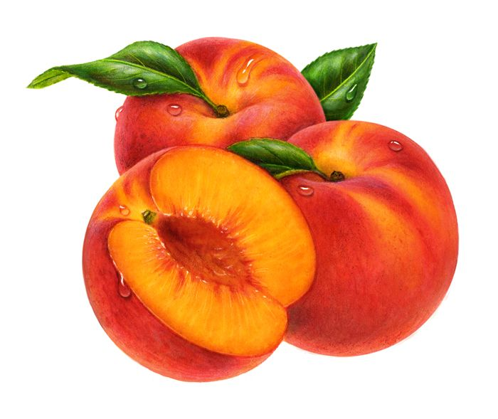 Peach so big cliparts free download clip art on.