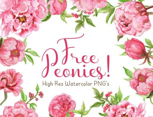 Free Watercolor Peonies Clipart.