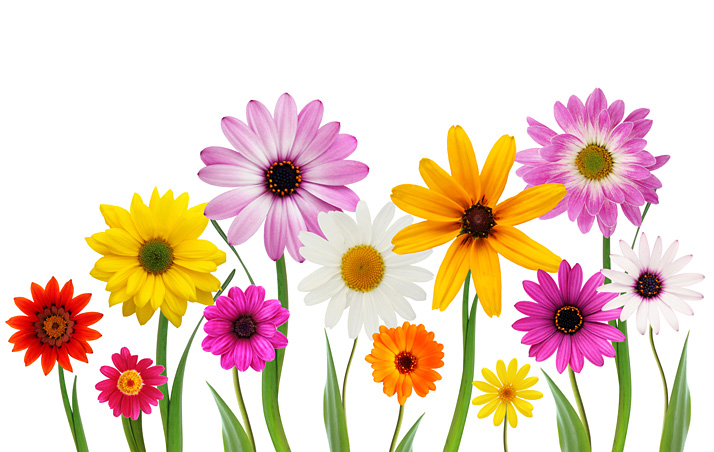 Free Clipart Spring Flowers Flowers Healthy