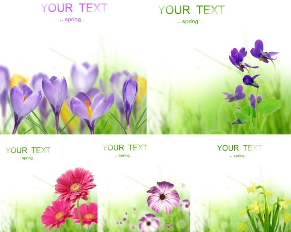 Spring flower images free stock photos download (13,423 Free stock.