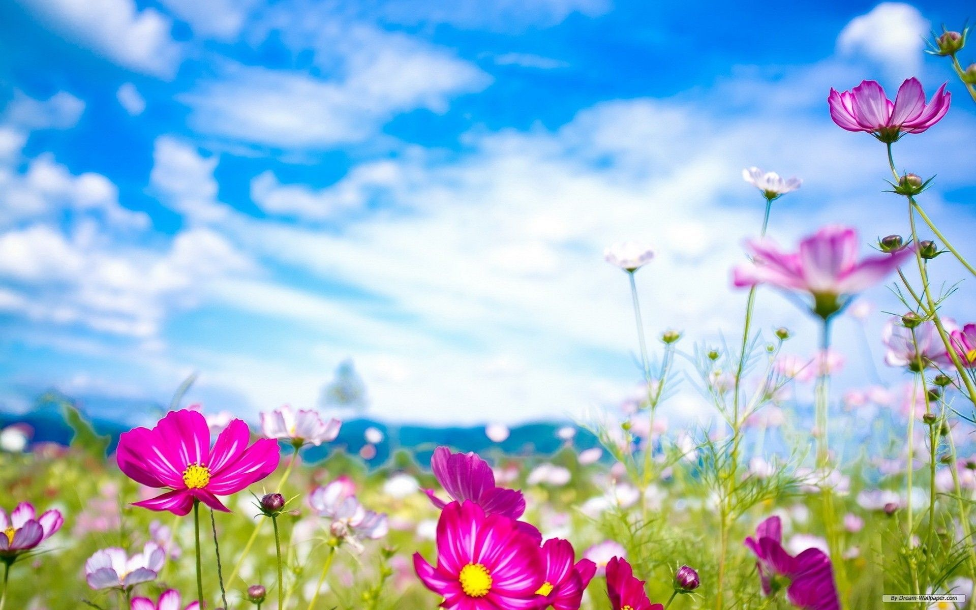 Free Desktop Wallpapers Spring Flowers.