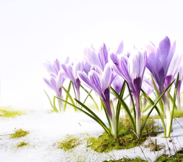 Flower images spring flowers free stock photos download (13,423.