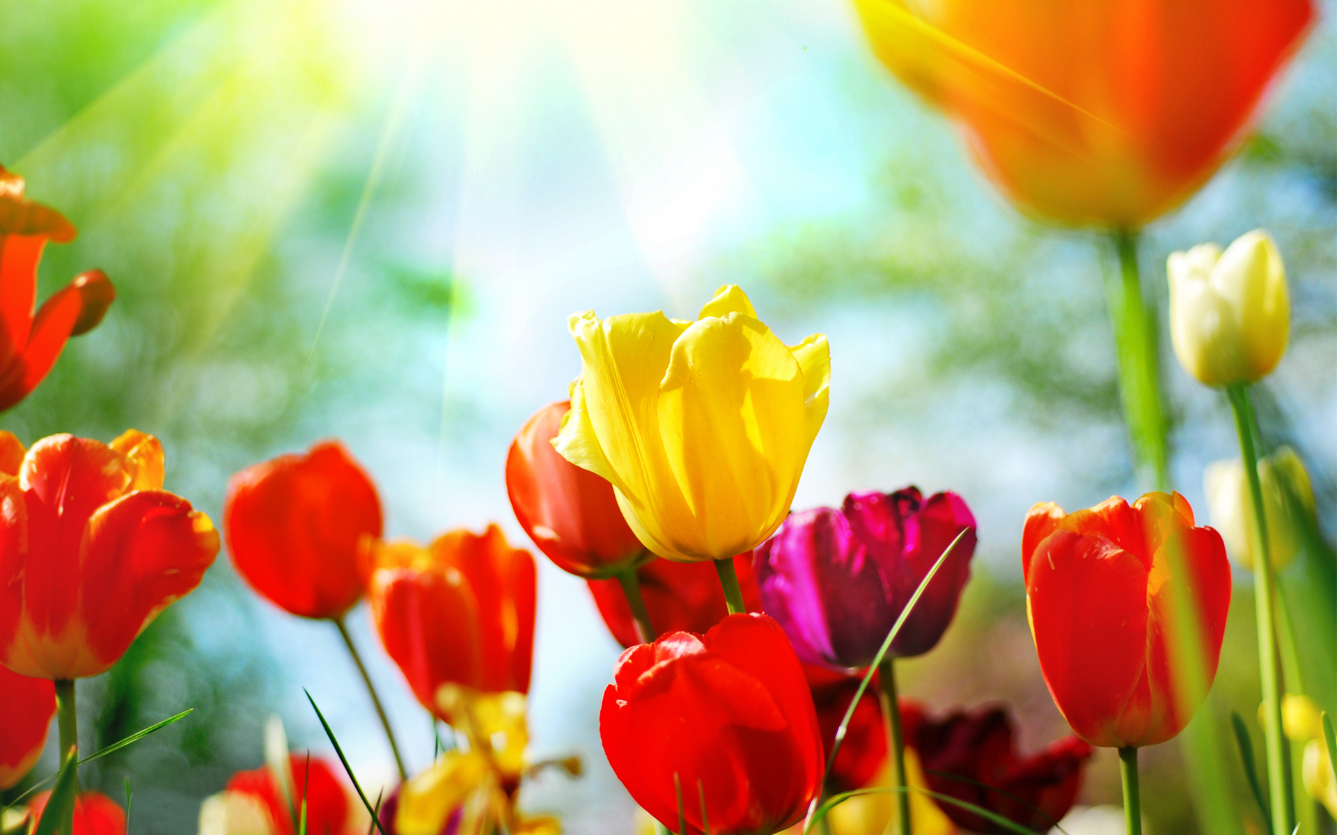 Free Picture Of Spring Flowers.