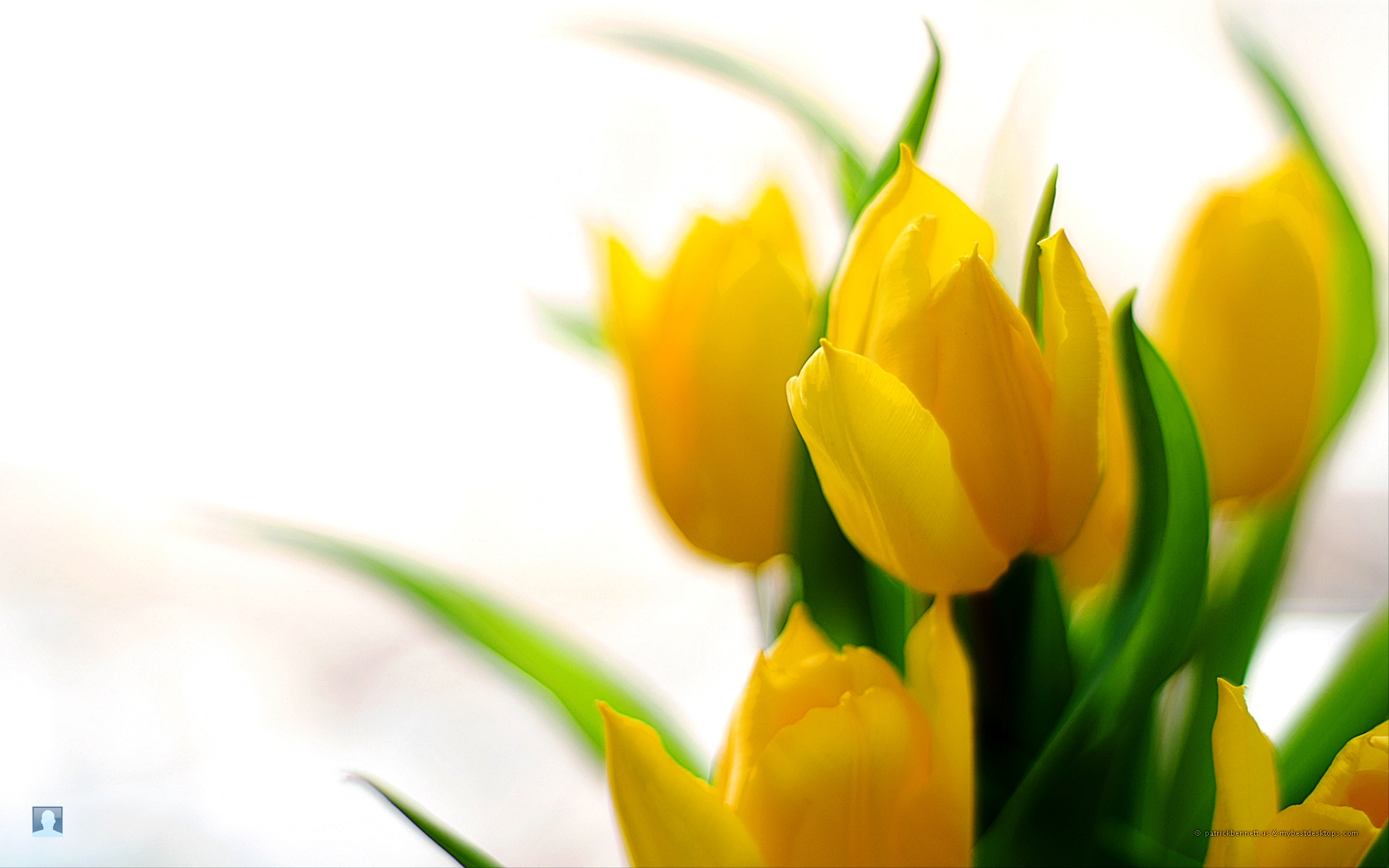 Images, Wallpapers of Spring Flowers in HD Quality: BsnSCB.com.
