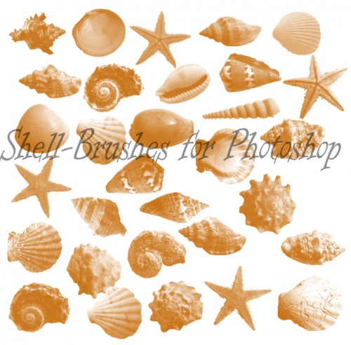 130+ Magnificent Free Photoshop Shells Brushes.