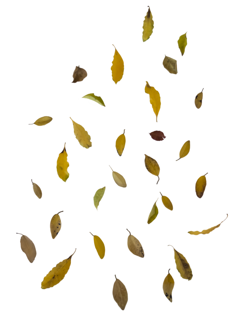 Falling leaf overlay 1 free to use by Kibblywibbly.