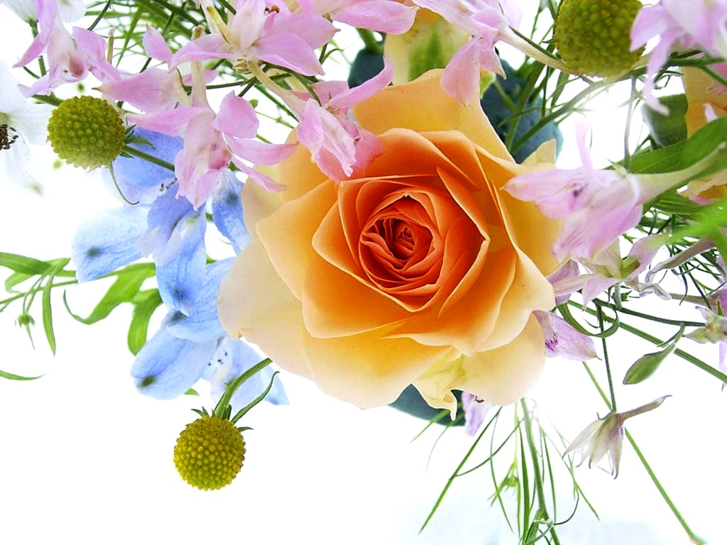 Beautiful Flowers Wallpaper Free Download.