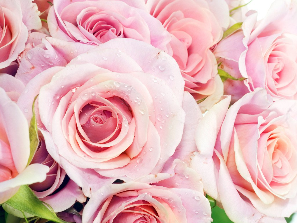 Free pictures of beautiful flowers clipground worlds top 100 beautiful flowers images wallpaper photos free izmirmasajfo