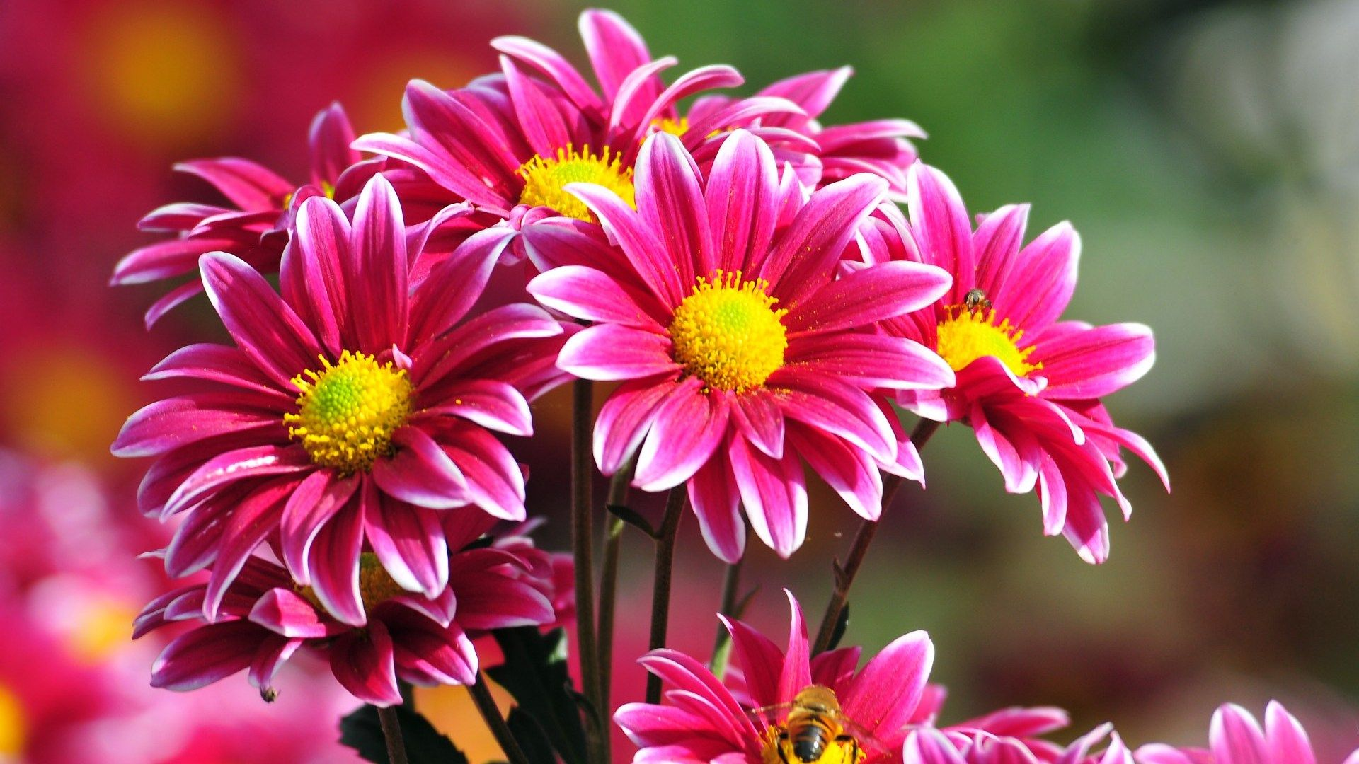 Free Download Of Flower Pictures Clipground