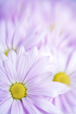 Colorful flower images free stock photos download (15,703 Free.