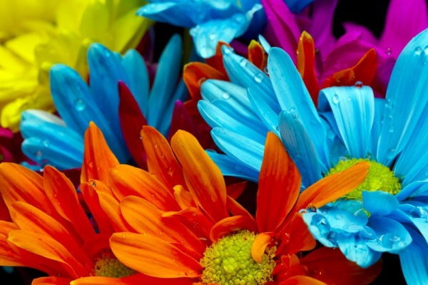 Colorful flower wallpaper free stock photos download (16,604 Free.