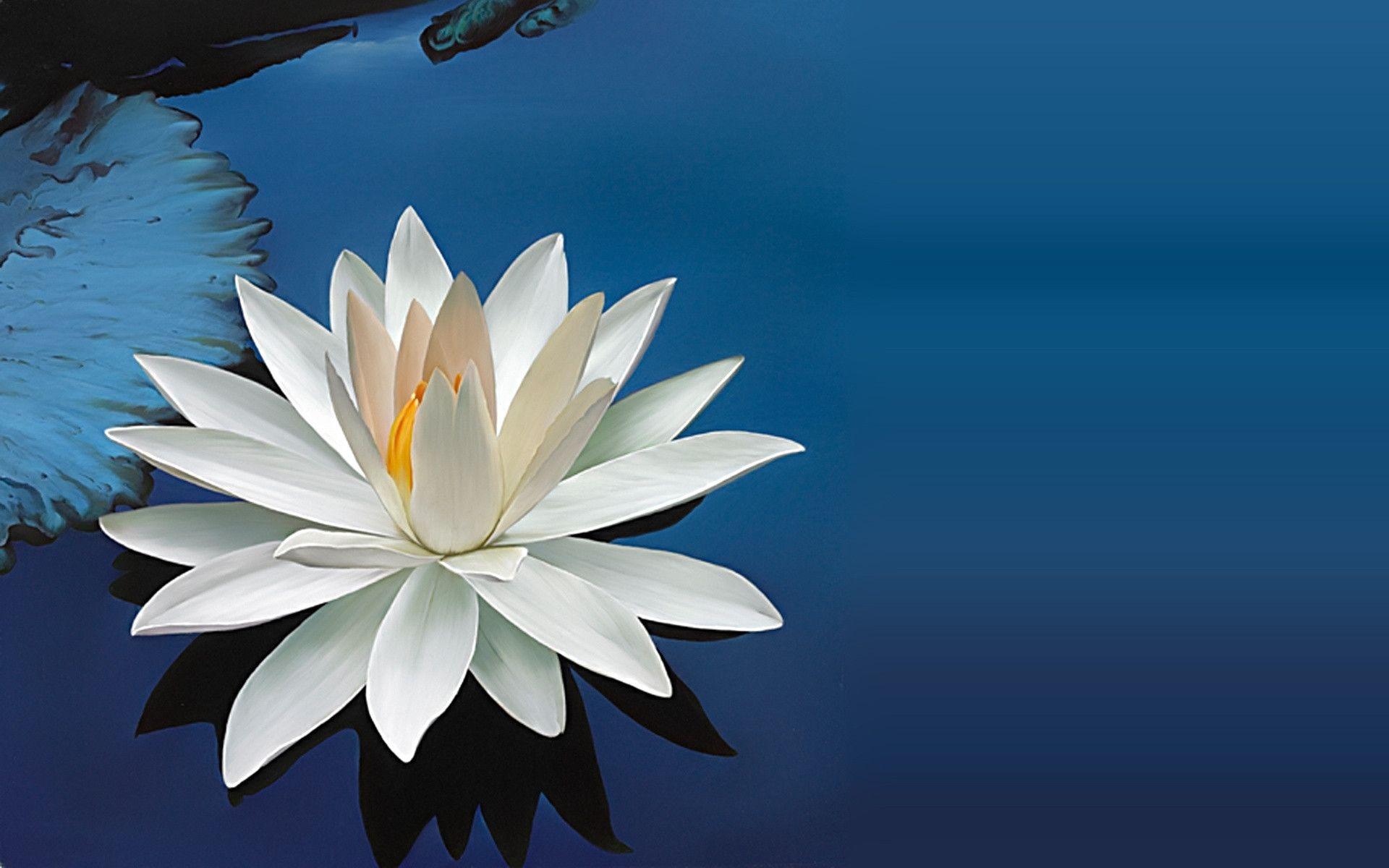 Water Lilies Wallpaper, 100% Quality Water Lilies HD Pics #TL972.