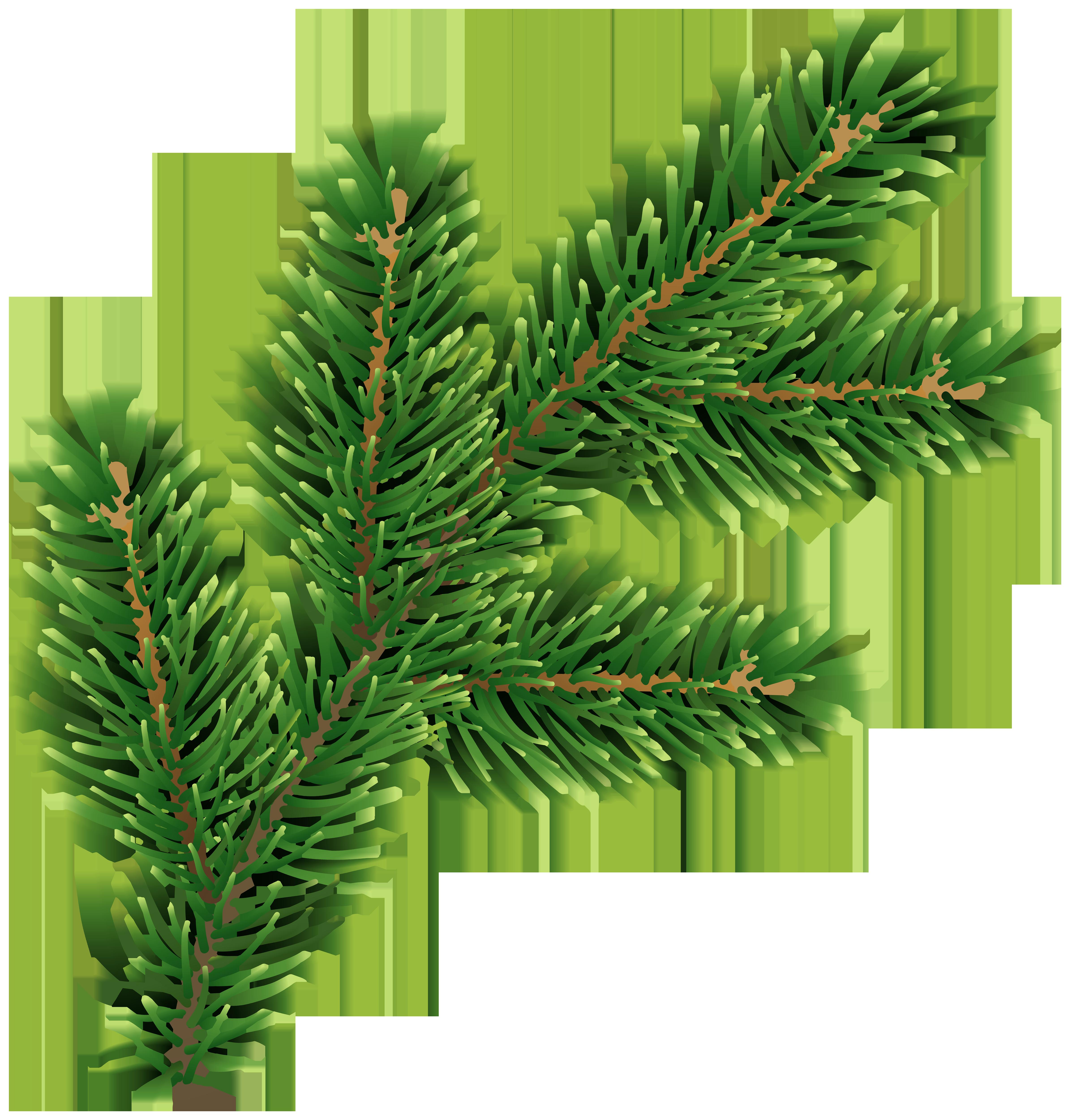 Pine Branch Clip Art Deco Image.
