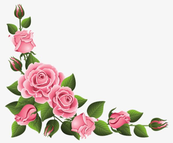 Pink Rose Border, Rose Clipart, Lace, Flowers PNG.