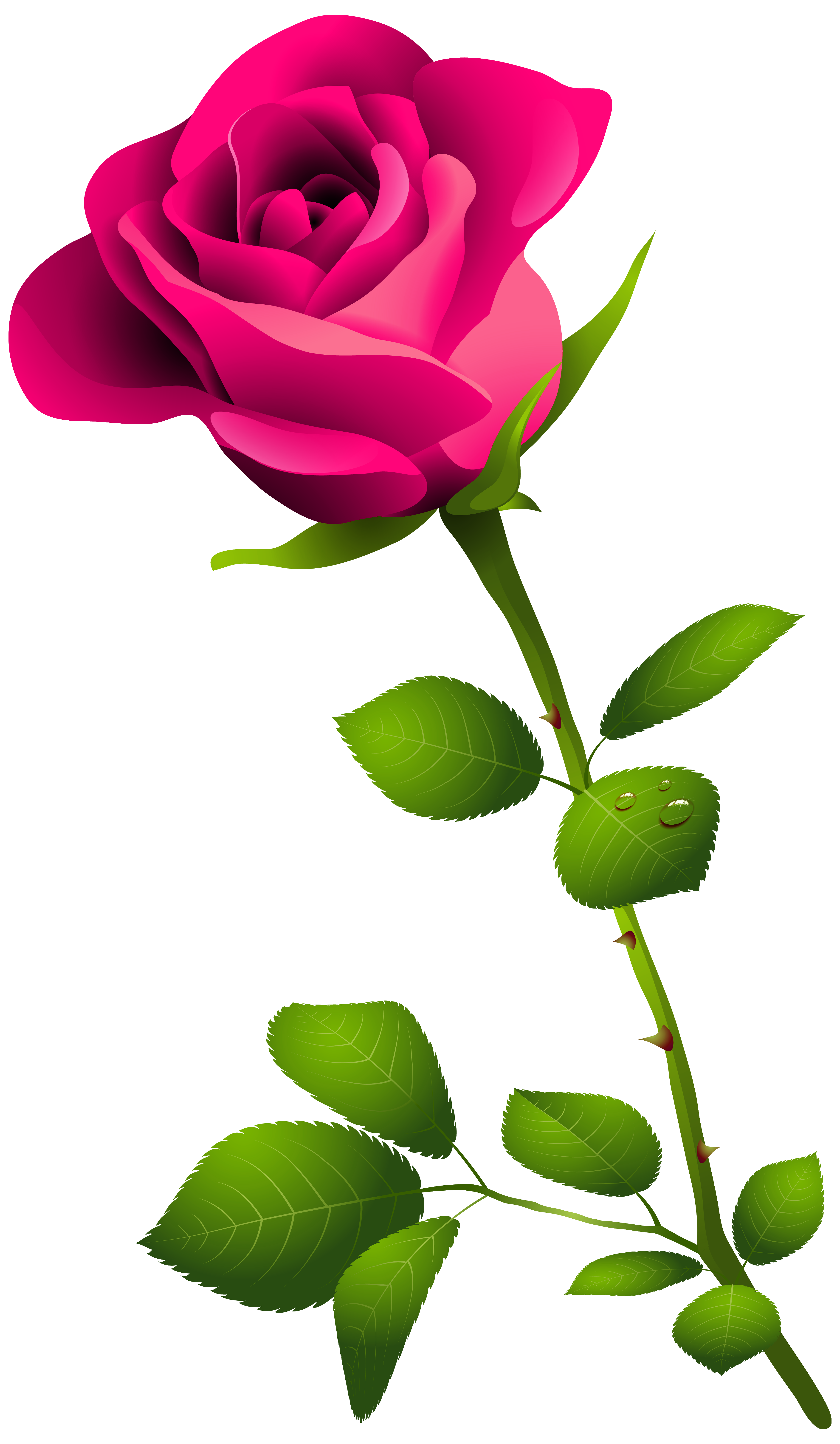 Pink Rose with Stem PNG Clipart Image.
