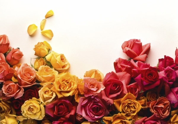 Roses pictures free stock photos download (1,938 Free stock photos.