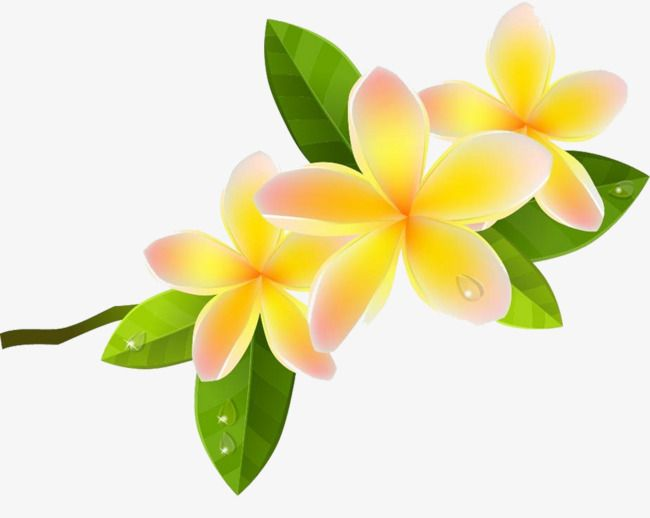 Cartoon Plumeria Picture Material, Cartoon Clipart, Plumeria.