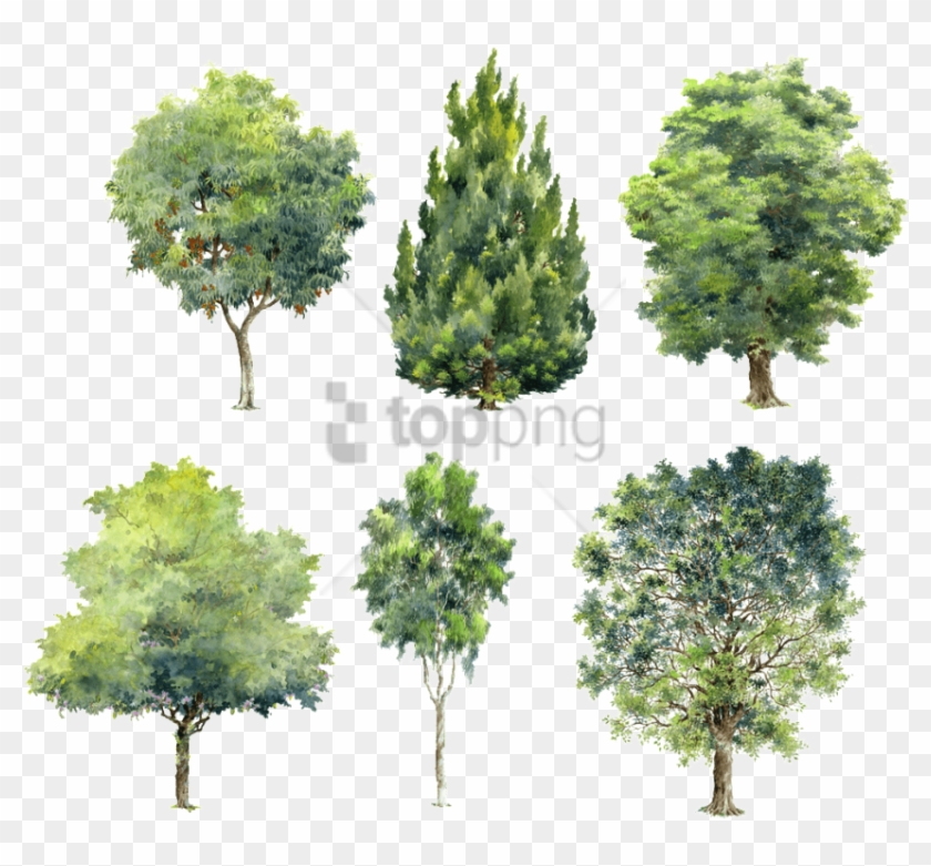 Free Png Watercolor Trees For Photoshop Png Image With.