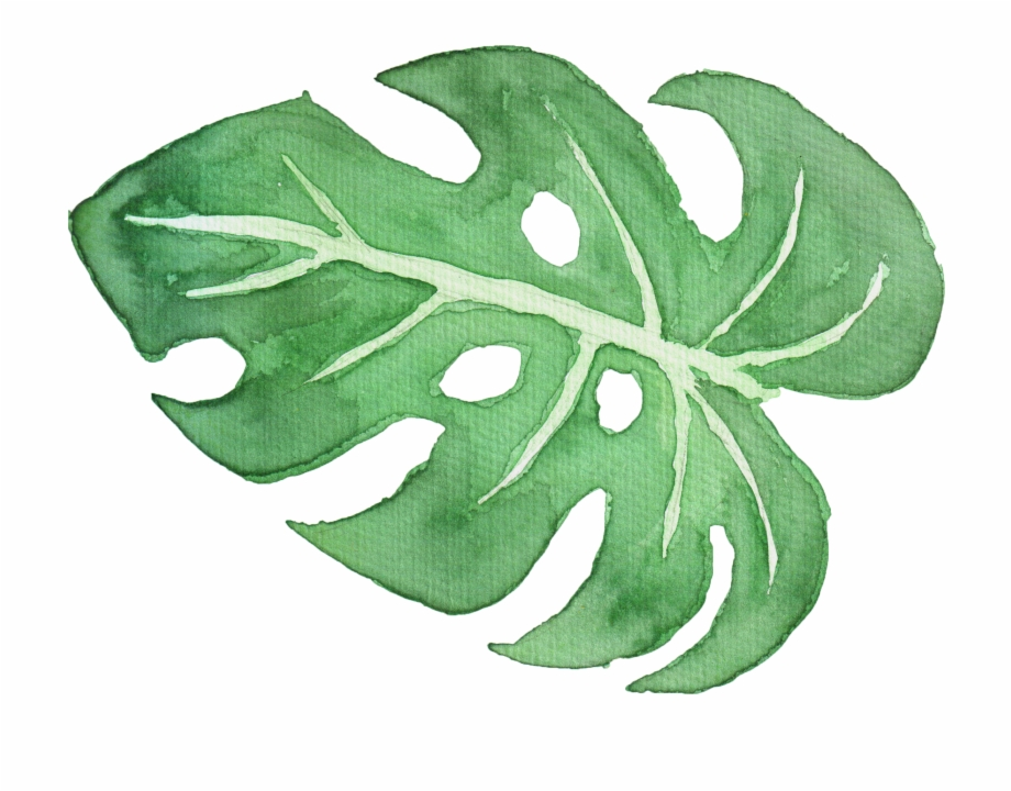Tropical Leaf Watercolor Png.