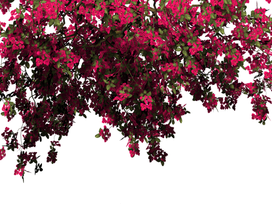 Bougainvillea leaf png images free download.