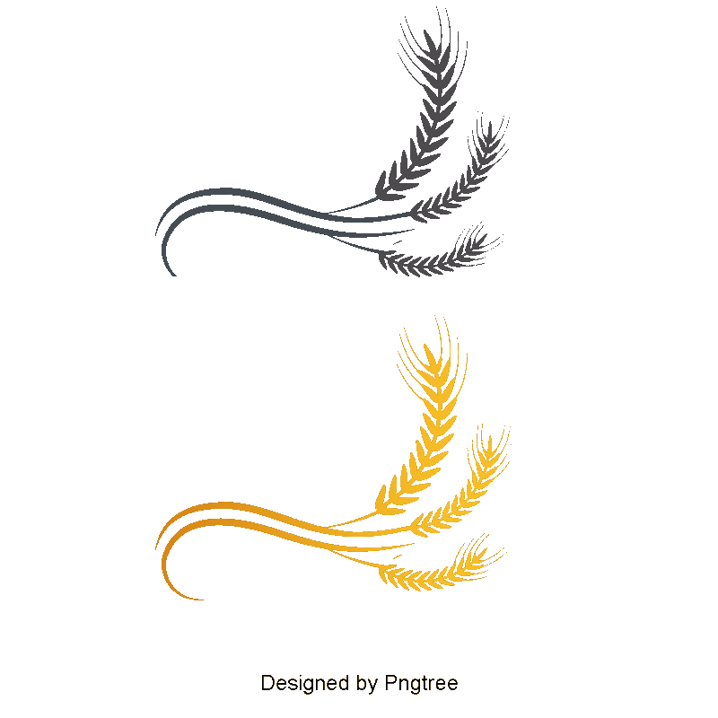 Wheat Logo, Wheat Vector, Logo Vector, Colored PNG and Vector for.