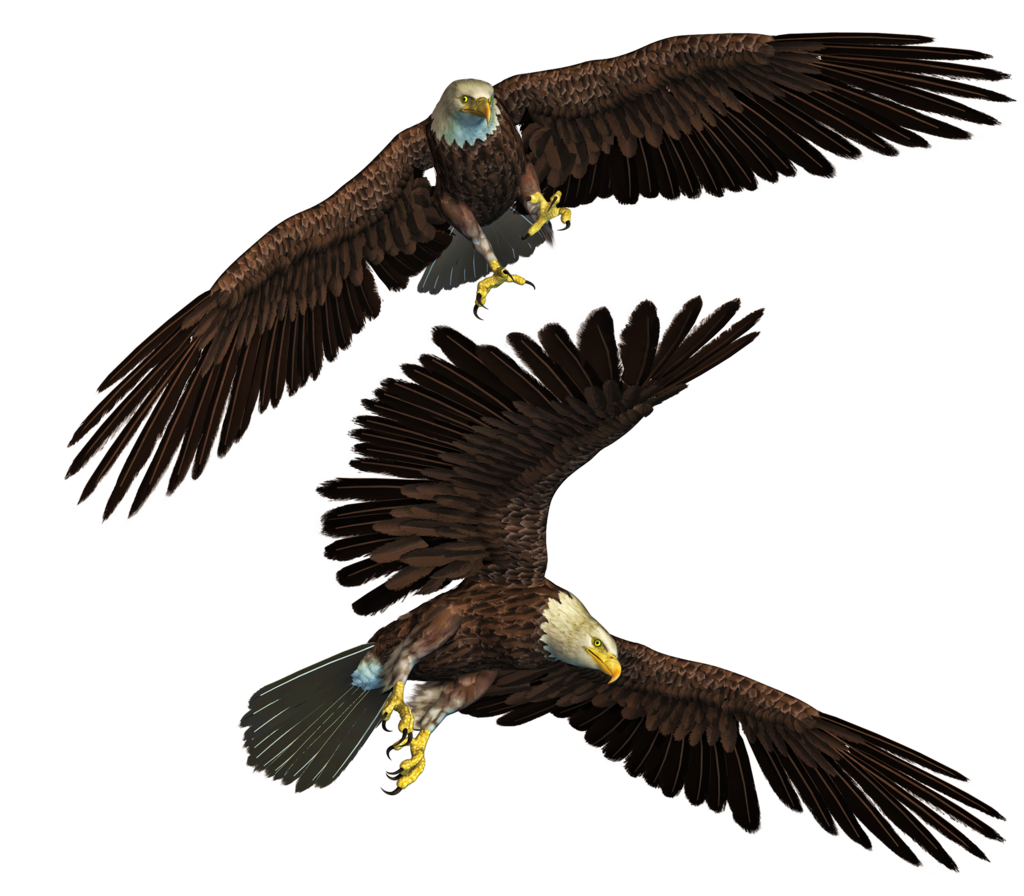 Eagle Png Stock free for photoshop manipulation by Edit Perfections.