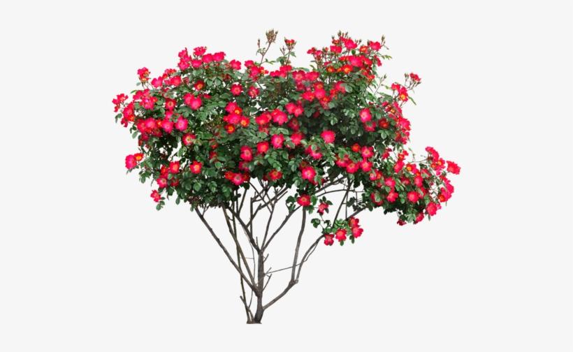 Photoshop Images, Tree Photoshop, Landscape Elements,.