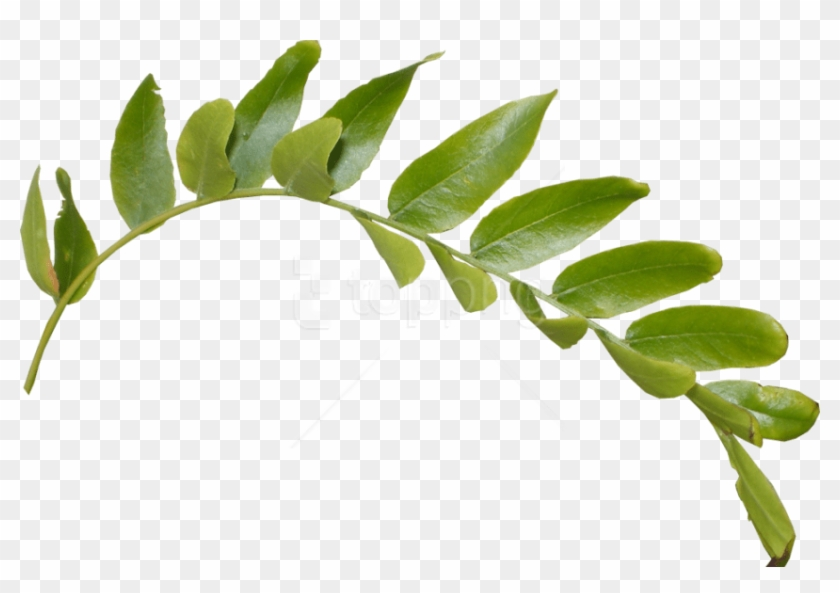 Free Png Download Leaves Png Images Background Png.
