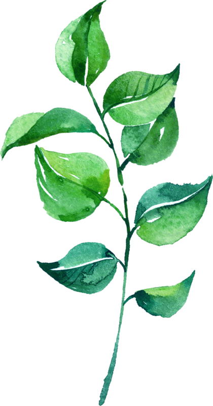 Leaves PNG Images Transparent Free Download.