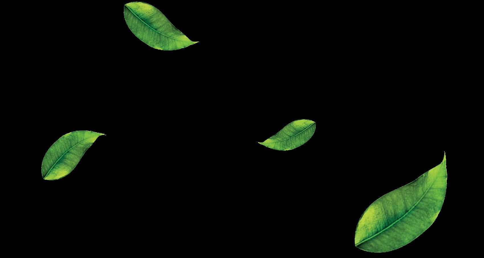 Vector Free Png Leaf Download #38628.
