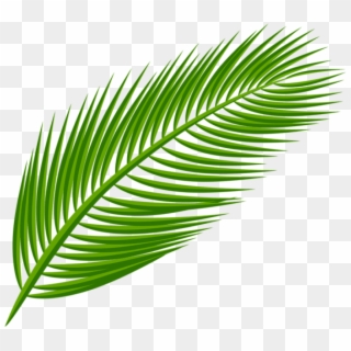 Free Palm Leaf PNG Images.
