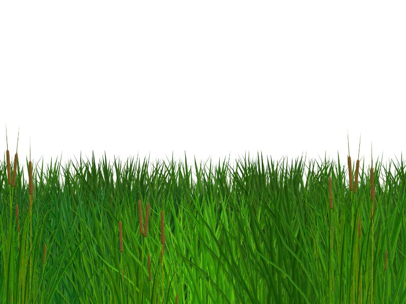 Seamless Grass Border Free PNG Clipart (Nature.